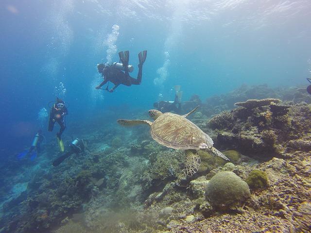 Entdeckt die Karettschildkröten in Borneo - Reiseziele im März