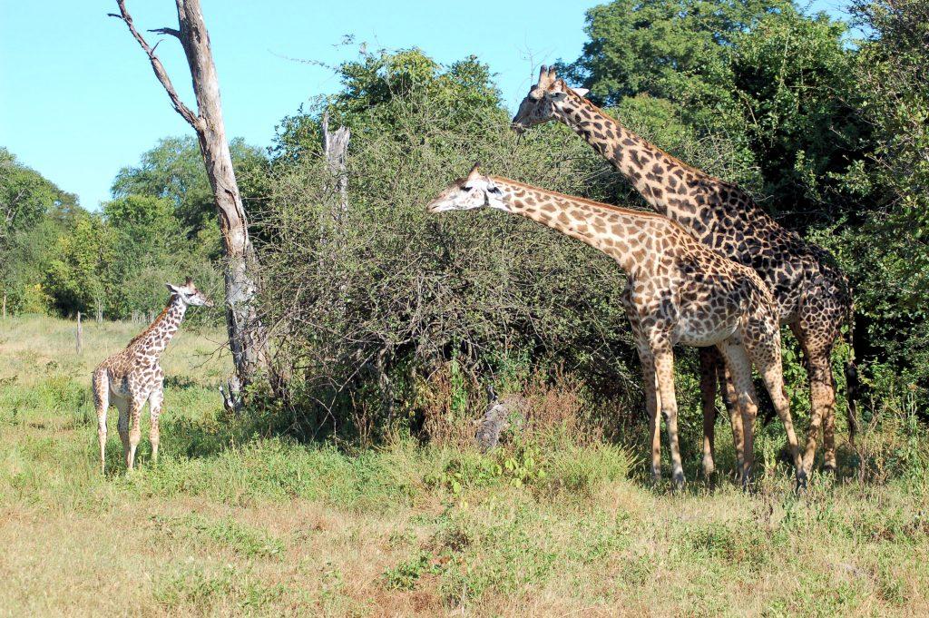 Reiseziele im Mai - South Luangwa Nationalpark